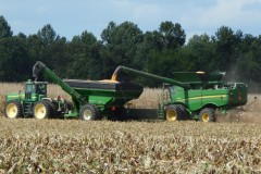 carlton-harvest